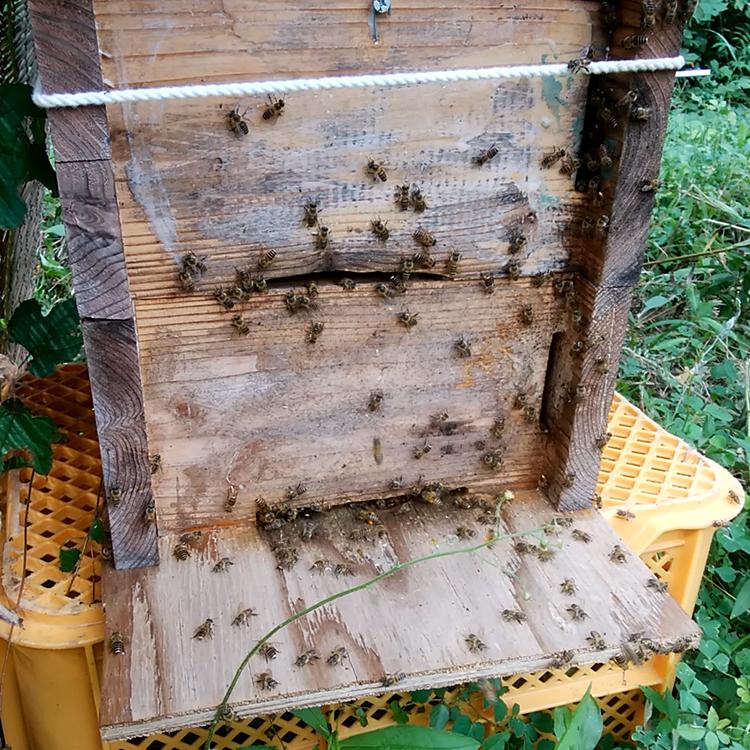 木村養蜂場